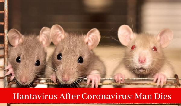 Hantavirus After Coronavirus: Man Dies in China Tested Hantavirus Positive